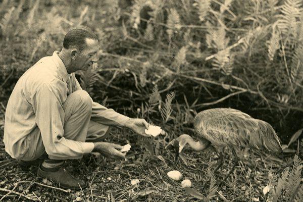 Orlozoo: Delmar Nicholson's Wild Journey to Create the Orlando Municipal Zoo